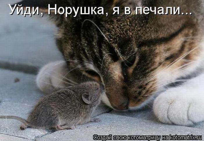 http://dileo.ru/uploads/images/00/60/57/2011/10/15/08a5baacfb.jpg