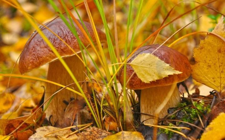 Доклад на тему жизнь осенью растений 2403