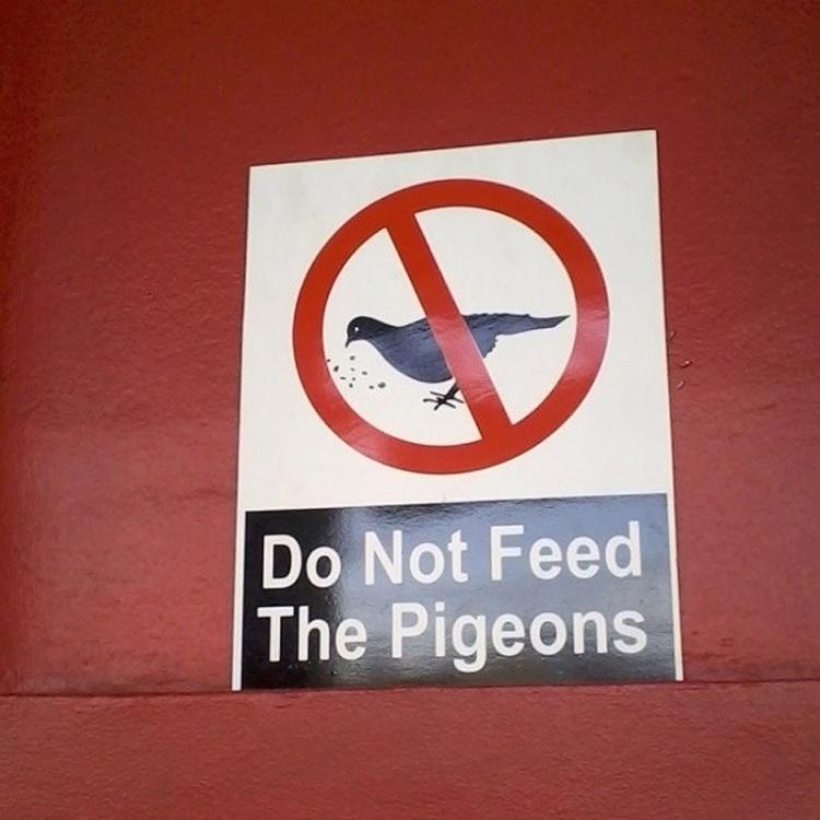Не кормите голубей, или пожалеете!