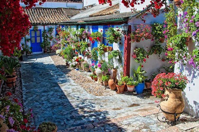 краткое содержание самые красивые цветый двора частного дома фото общение