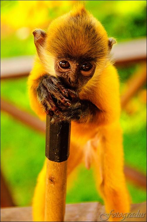 Красивые животные (100 фотографий)