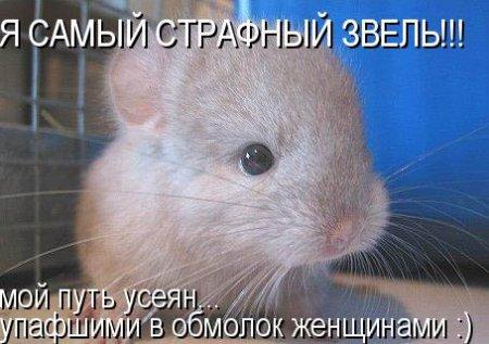 http://dileo.ru/uploads/images/f/2/2/5/1/ac81c8c418.jpg